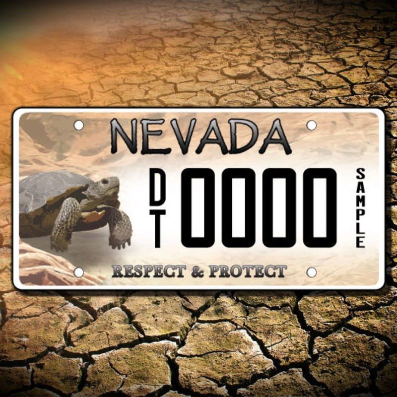 Desert Tortoise License Plates Are Now Available To Support Tortoise Conservation Ksnv